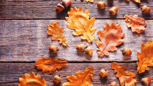 seccare foglie