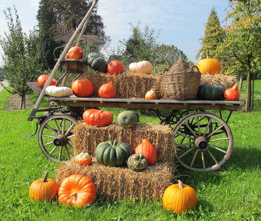 pumpkins-216012_960_720