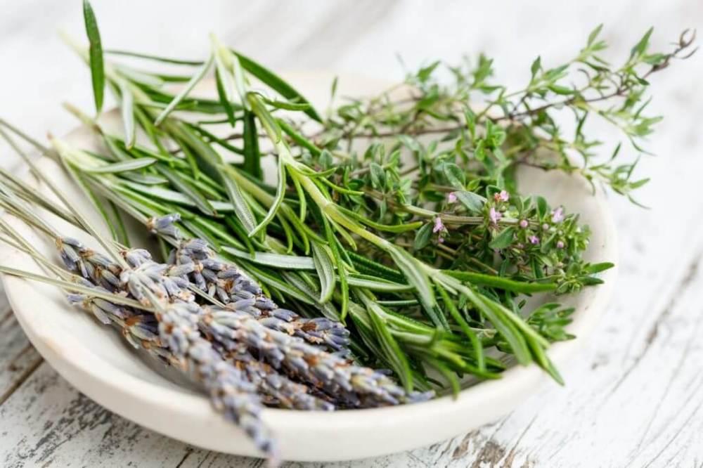 herbs-2523119_1920-1024x683-1